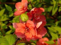 Floraisons du printemps II