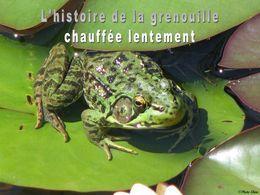 L'histoire de la grenouille chauffée lentement