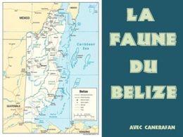 La faune du Belize
