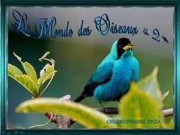 Le monde des oiseaux 2