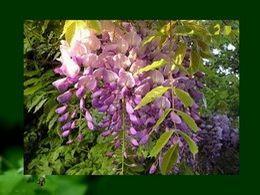 Nature: PPS Le réveil du printemps