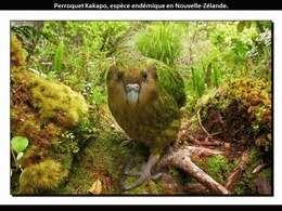 Les plus beaux oiseaux rares