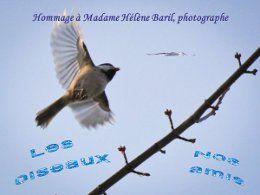 PPS Nos amis les oiseaux