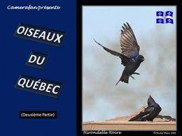 Oiseaux du Québec 02