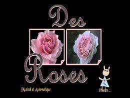 Roses de toujours