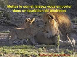 Tourbillon de tendresse
