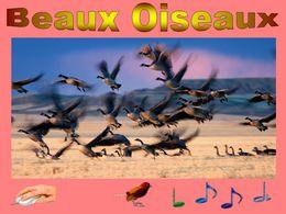 diaporama pps Beaux oiseaux