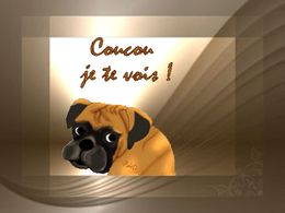 diaporama pps Chats et chiens