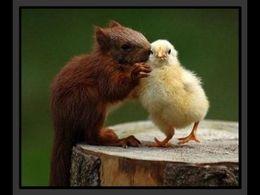 diaporama pps Des photos d'animaux