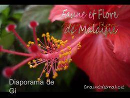 diaporama pps Faune et flore de Malaisie