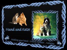 diaporama pps Hund und Katze