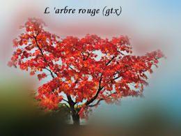 diaporama pps L'arbre rouge