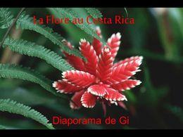 diaporama pps La flore au Costa Rica