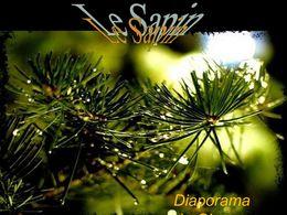 diaporama pps Le sapin de Noël