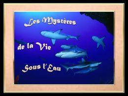 diaporama pps Les mystères de la vie sous l'eau