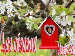 diaporama pps Les oiseaux