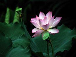 diaporama pps Lotus