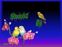 diaporama pps Oiseaux 3D