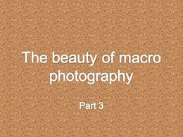 diaporama pps The beauty of macro photography 3
