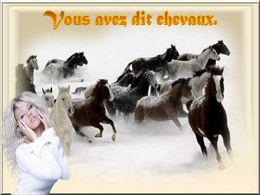 diaporama pps Vous avez dit chevaux