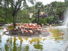 diaporama pps Zoo de la Palmyre