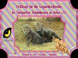 diaporama pps Zoo Schönbrunn – Gepard