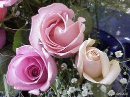 13 giga roses en pps