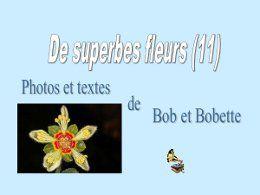 De superbes fleurs 11