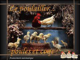 Le poulailler poules et coqs