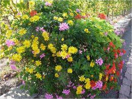 Fleurs de Toussaint