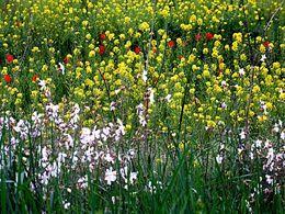 Fleurs sauvages en pps