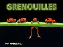 Diaporama sur les grenouilles