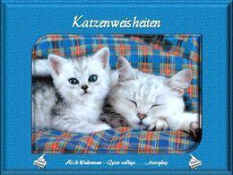 Katzenweisheiten 4