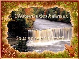 L'automne des animaux