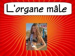 Diaporama humoristique sur l'organe mâle