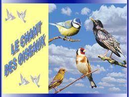 Le chant des oiseaux en diaporama