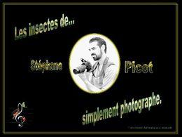 Les insectes de Stéphane Picot