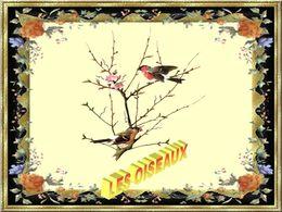 PPS Les oiseaux