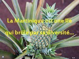 PPS Voyage: La Martinique 1-2