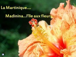 Diaporama voyage en Martinique N°3