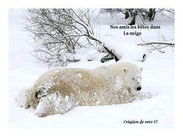 Nos amis les bêtes dans la neige