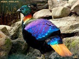 Diaporama oiseaux inhabituels