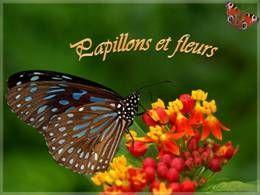 Papillons et fleurs en diaporama