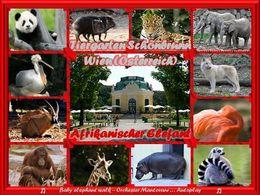 PPS Afrikanischer Elefant – Tiergarten Schönbrunn