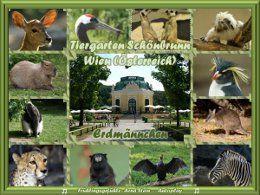 Tiergarten Schönbrunn Erdmännchen