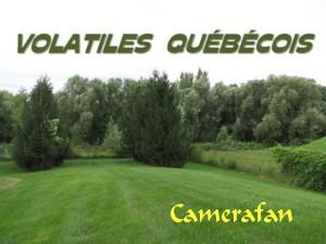 Volatiles québécois