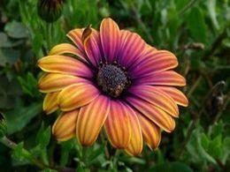 la plus belle fleur