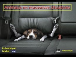 Animaux en mauvaises situations