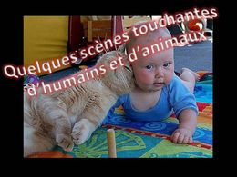 PPS Animaux et humains