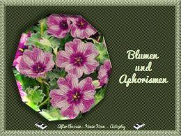Aphorismen und Blumen 2
